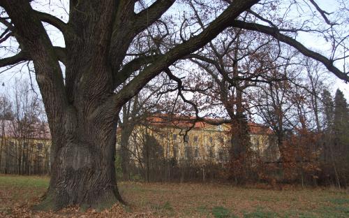 pamatny_strom_v_parku.jpg