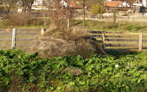zelinarska_zahrada_repice.jpg