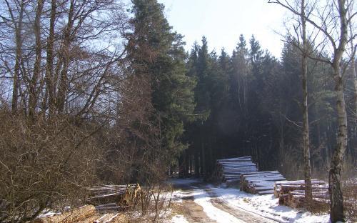 tezba_v_rosickem_lese.jpg