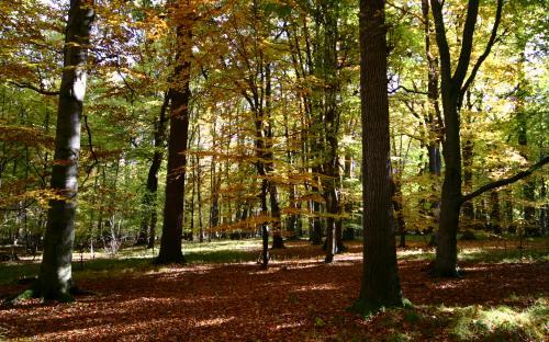 podzim_v_prirodni_rezervaci.jpg