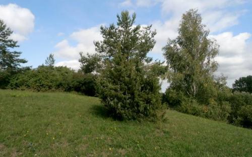 prirodni_pamatka_kozlovska_stran.jpg