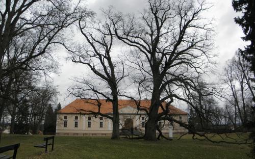 pamatne_stromy_stekenske_duby_16.3._2021.jpg